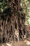 Κεφάλι του Βούδα που περιβάλλεται από τις ρίζες Στοκ Φωτογραφία