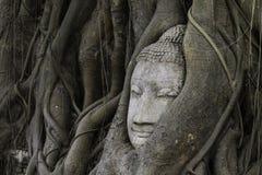 Κεφάλι του Βούδα στο δέντρο ρίζας σε Wat Mahathat Ayutthaya ιστορικό γ Στοκ Φωτογραφίες