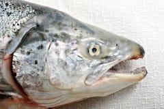 Κεφάλι ψαριών ενός σολομού με τα αιχμηρά δόντια και τις αργυροειδείς κλίμακες Στοκ εικόνα με δικαίωμα ελεύθερης χρήσης