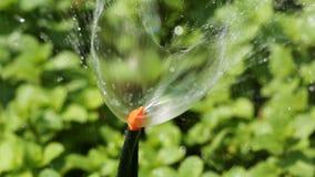 Κεφάλι ψεκαστήρων που ποτίζει το φυτικό κήπο φιλμ μικρού μήκους