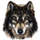 Κεφάλι λύκων Διανυσματική απεικόνιση