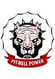 κεφάλι pitbull Στοκ Φωτογραφία