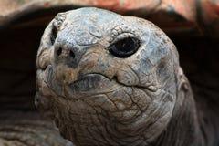 Κεφάλι Tortise Στοκ εικόνες με δικαίωμα ελεύθερης χρήσης