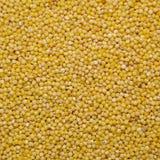 κεχρί κίτρινο Στοκ Εικόνες
