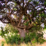 Κελτικά δέντρο & x28 κόμβων Summer& x29  Στοκ Φωτογραφίες