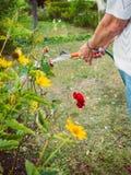 Κηπουρική - άρδευση των λουλουδιών Στοκ Εικόνες