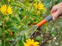 Κηπουρική - άρδευση των λουλουδιών Στοκ Φωτογραφίες