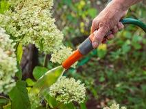 Κηπουρική - άρδευση των λουλουδιών Στοκ Φωτογραφία