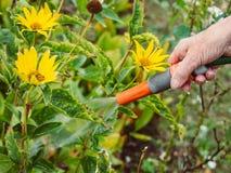 Κηπουρική - άρδευση των λουλουδιών Στοκ φωτογραφίες με δικαίωμα ελεύθερης χρήσης