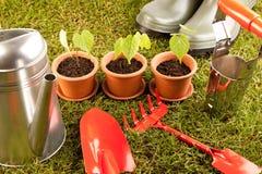 κηπουρική έννοιας Στοκ Εικόνα