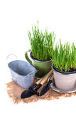 κηπουρική έννοιας Στοκ φωτογραφία με δικαίωμα ελεύθερης χρήσης