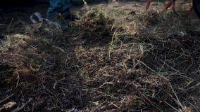 Κηπουρική ατόμων εργασίας καθαρή η χλόη Εργασία στη γεωργία κήπων ο αγρότης φορτώνει τα απορρίμματα και τη χλόη wheelbarrow φιλμ μικρού μήκους