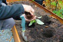 Κηπουρική γυναικών Στοκ εικόνες με δικαίωμα ελεύθερης χρήσης