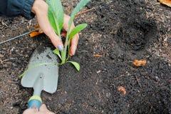 Κηπουρική γυναικών Στοκ φωτογραφία με δικαίωμα ελεύθερης χρήσης