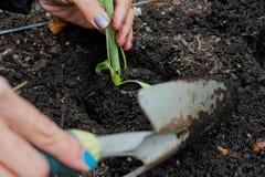 Κηπουρική γυναικών Στοκ Φωτογραφίες