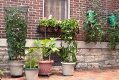 κηπουρική εμπορευματοκιβωτίων Στοκ εικόνα με δικαίωμα ελεύθερης χρήσης