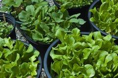 κηπουρική εμπορευματο&k Στοκ φωτογραφίες με δικαίωμα ελεύθερης χρήσης