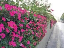 Κηπουρική Κάθετο τοπίο τοίχος λουλουδιών στην πλευρά του δρόμου στοκ εικόνες