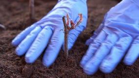 Κηπουρική και δενδροκηποκομία - μια γυναίκα φυτεύει τις εγκαταστάσεις σε ένα κιβώτιο στο πεζούλι την άνοιξη απόθεμα βίντεο