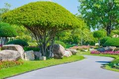 Κηπουρική και εξωραϊσμός Στοκ εικόνες με δικαίωμα ελεύθερης χρήσης