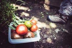 Κηπουρική και veggies για το βραδυνό στοκ εικόνα με δικαίωμα ελεύθερης χρήσης