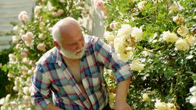 Κηπουρική κηπουρών Παππούς που εργάζεται στον κήπο Επαγγελματικός κηπουρός στην εργασία απόθεμα βίντεο