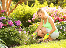 Κηπουρική Ξανθή νέα γυναίκα που φυτεύει τα λουλούδια στον κήπο Στοκ φωτογραφίες με δικαίωμα ελεύθερης χρήσης