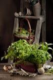 Κηπουρική στη χώρα Στοκ εικόνες με δικαίωμα ελεύθερης χρήσης