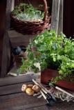 Κηπουρική στη χώρα Στοκ φωτογραφίες με δικαίωμα ελεύθερης χρήσης