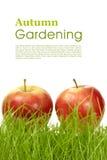 κηπουρική φθινοπώρου Στοκ φωτογραφία με δικαίωμα ελεύθερης χρήσης