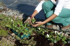 Κηπουρική Στοκ Φωτογραφίες