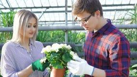 Κηπουροί που ελέγχουν flowerpots στο gardenhouse 4K φιλμ μικρού μήκους