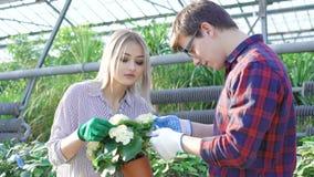 Κηπουροί που ελέγχουν flowerpots στο gardenhouse 4K απόθεμα βίντεο