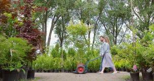 Κηπουροί που ωθούν το δέντρο στο βαγόνι εμπορευμάτων απόθεμα βίντεο