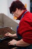 Κηπουροί στην εργασία Στοκ Εικόνες