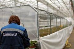 Κηπουροί στην εργασία Στοκ Φωτογραφίες