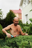 Κηπουρός ατόμων με τη διαθέσιμη κάνοντας τέχνη κουρευτών ζώων τέμνων ιουνίπερος Στοκ φωτογραφία με δικαίωμα ελεύθερης χρήσης