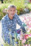 Κηπουρός ατόμων που εξωραΐζει και που παίρνει τα όμορφα λουλούδια προσοχής Στοκ Φωτογραφία