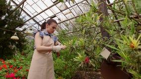 Κηπουρός γυναικών με το διαθέσιμο δέντρο φροντίδας ψαλίδων περικοπής Κηπουρική στο θερμοκήπιο φιλμ μικρού μήκους