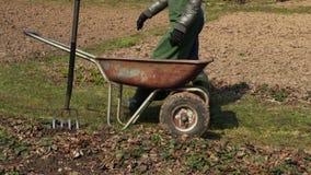 Κηπουρός γυναικών που βοτανίζει το χώμα απόθεμα βίντεο
