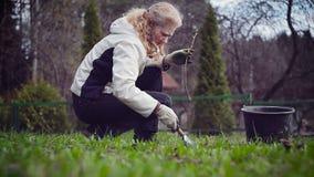 Κηπουρός γυναικών που φυτεύει τον κλάδο των σταφίδων στο έδαφος απόθεμα βίντεο