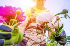 Κηπουρός και προσοχή λουλουδιών στοκ φωτογραφίες με δικαίωμα ελεύθερης χρήσης