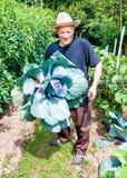 Κηπουρός με το οργανικό πορφυρό λάχανο Στοκ Φωτογραφία