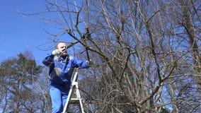 Κηπουρός που αναρριχείται στους κλάδους δέντρων μηλιάς σκαλών και περικοπής με τους κουρευτές ζώων απόθεμα βίντεο