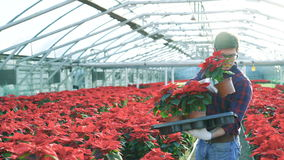 Κηπουρός που βάζει κόκκινα flowerpots στο gardenhouse 4K απόθεμα βίντεο