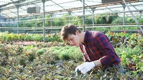 Κηπουρός που εξετάζει τα λουλούδια στο gardenhouse 4K φιλμ μικρού μήκους