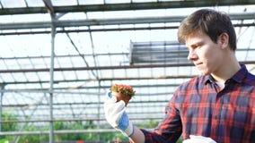 Κηπουρός που εξετάζει το σπορόφυτο στο gardenhouse 4K απόθεμα βίντεο