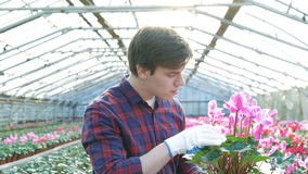Κηπουρός που εξετάζει flowerpot στο gardenhouse 4K φιλμ μικρού μήκους