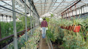 Κηπουρός που εξετάζει flowerpots στο gardenhouse 4K απόθεμα βίντεο