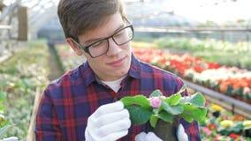 Κηπουρός που ελέγχει το σπορόφυτο στο gardenhouse 4K απόθεμα βίντεο